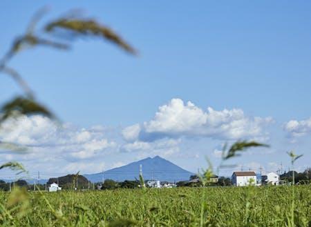 見渡す限り一面が宮崎協業さんの農地(100ha以上)から望む筑波山