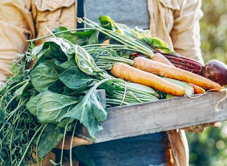 規格外の野菜を捨てずに活用するプロジェクト