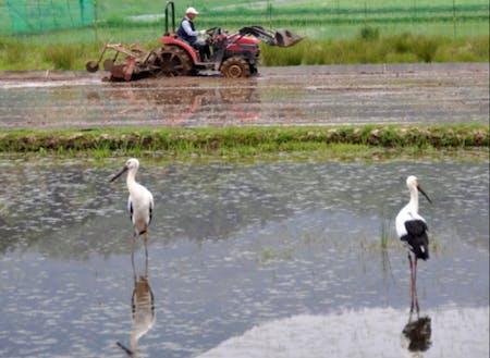 農業とコウノトリ