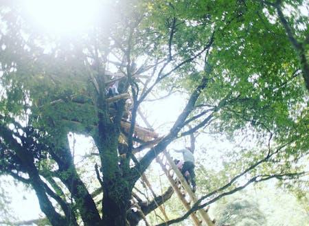 日本一高いツリーハウスをつくる人も