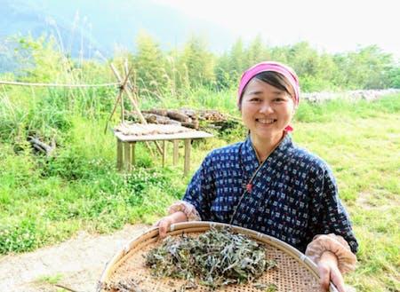 お茶は自家栽培、が椎葉スタイル