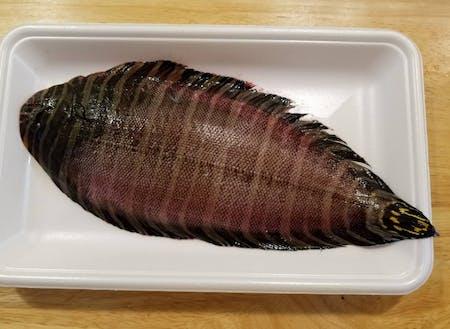 珍魚シマウシノシタを…