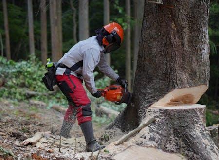 森は資源の宝庫