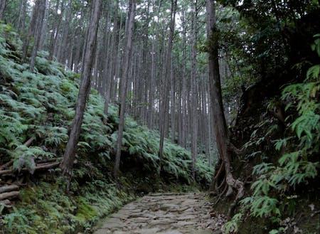 ぼんやりと暗い熊野古道は本宮に近くにつれて神聖な雰囲気に。