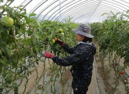 農業技術の習得に励む先輩隊員