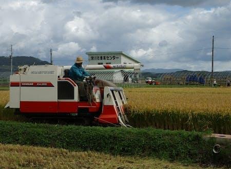 農業風景の様子