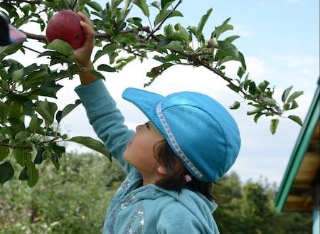 果樹王国深川でリンゴ狩りを楽しむ子供