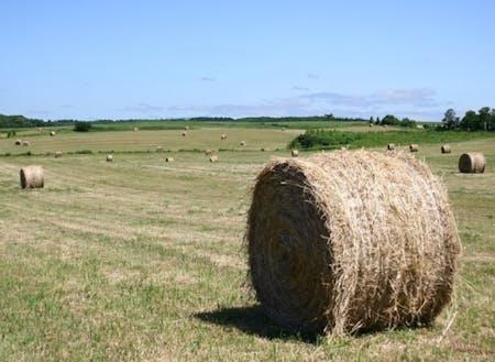 北海ならではの牧草ロール