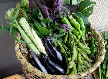 生産した野菜達