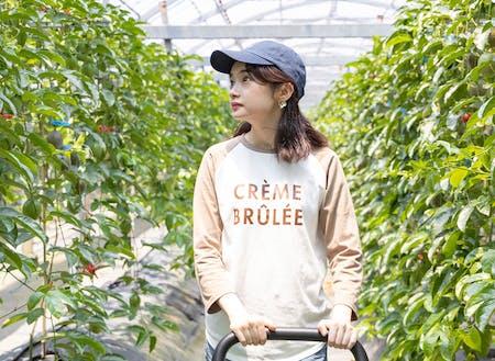 鹿児島県甑島パッションフルーツ農園でのふるさとワーホリ