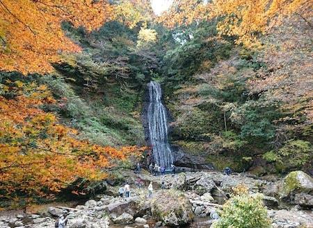 四十八の滝と広葉樹の森林が3㎞にわたる景勝「阿瀬渓谷」