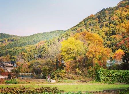 のんびりとした四季折々の美しい田舎の景色が広がっています