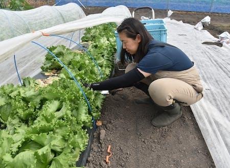 ㈱未来ファームで農業技術を学ぶ隊員