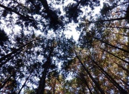 手入れされた木々を見上げると
