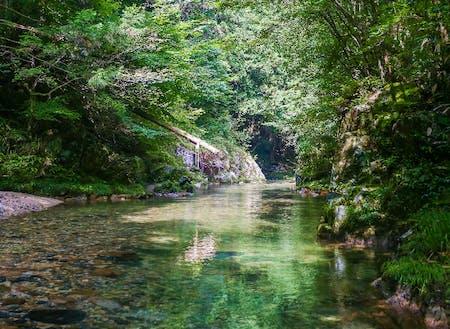 シャワークライミングを実施する水内川。鮎の美味しさも全国指折り