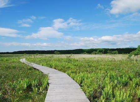 天然記念物標津湿原