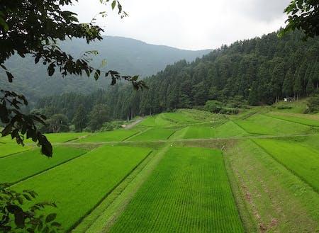 棚田が広がる中山間地域の竹野南地区