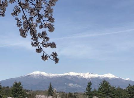 窓の外にこの景色。田舎は四季が目に見える。