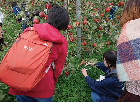 農家さんのリンゴ畑で収穫体験