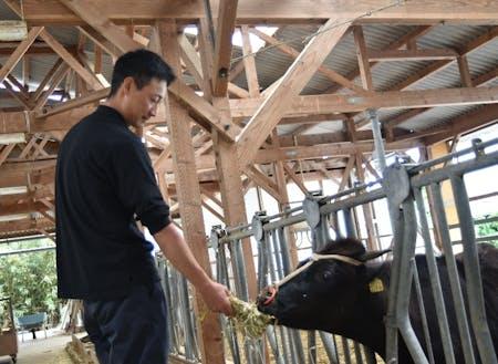 現役の協力隊員が日々、牛と奮闘中。