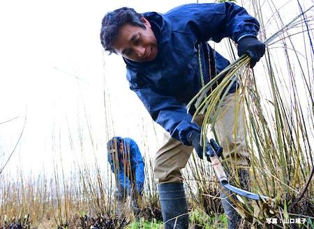 材料となるコリヤナギの栽培から製作、加工まで一貫して行います