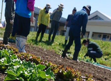 無農薬で育てた野菜の収穫体験。