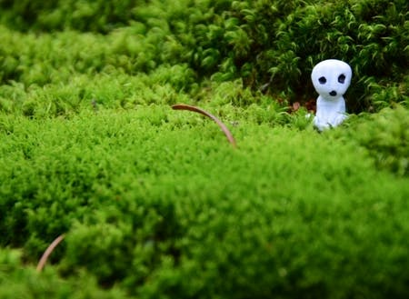 森の中生い茂る苔で何をする?
