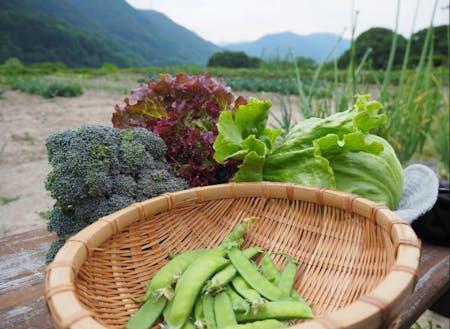 自宅で農業を学ぶ