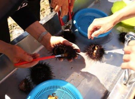 ウニ、昆布、ホッケなど島ならではの食材も豊富