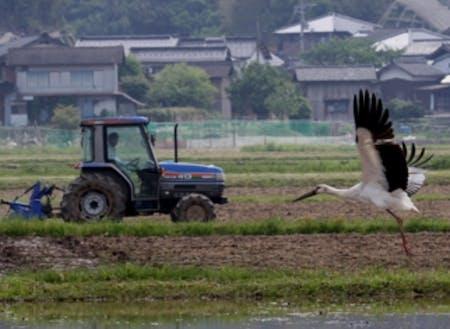 農作業中にコウノトリがやってくることも!