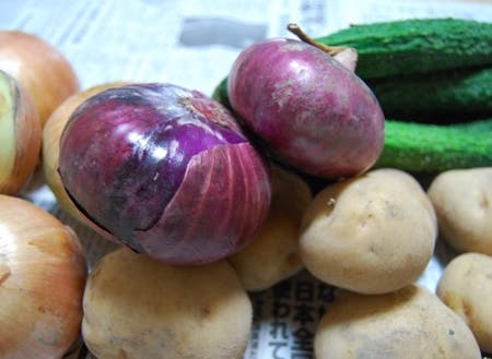 借りた畑で収穫できた野菜