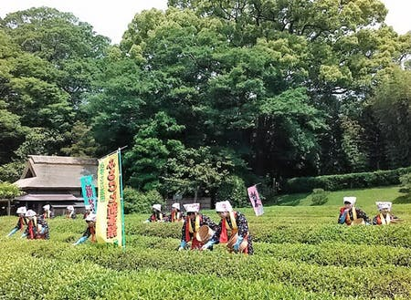 Society 5.0シティのイメージ:岡山後楽園の茶つみ祭