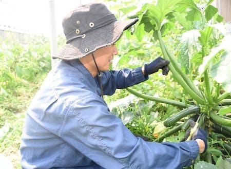 多品種の野菜栽培にチャレンジできます。