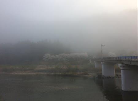 晴れた日は川一面に川霧がたちこめます