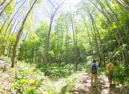 季節の森歩きプログラムの様子。森に興味はあるけれど1人では不安、という方が気軽に参加でき、好評です。