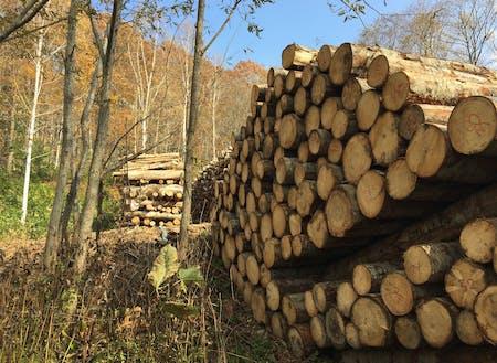 下川の町の面積の9割を占める森林。森にも木にも、可能性が溢れています。