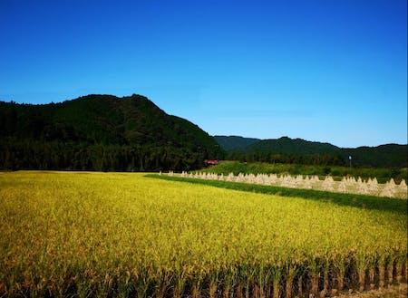 中土佐町の風景
