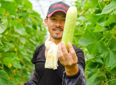 約130年前から町で栽培されている伝承野菜の「勘次郎胡瓜」。