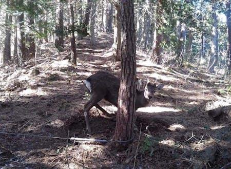 福田さんが初めて獲った鹿