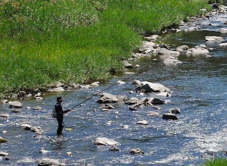 目の前を流れる星野川ではアユ釣りもできます