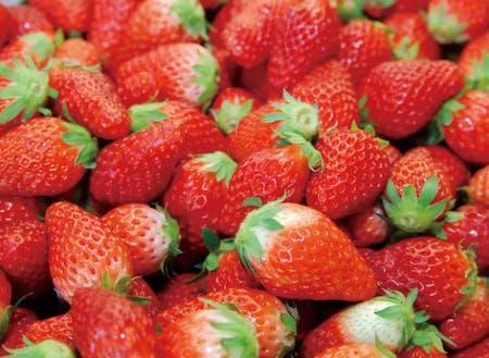 イチゴの栽培ノウハウ、販促の仕方など働きながら学べる環境は他にはそうはありません。