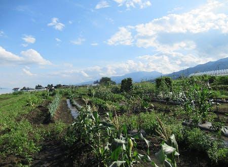 今年も町民菜園を借りて、野菜づくり。眺望抜群。