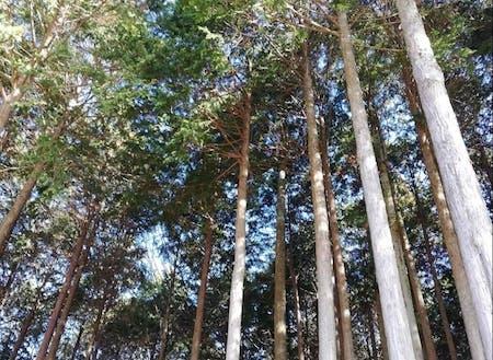 木々に囲まれた地域です