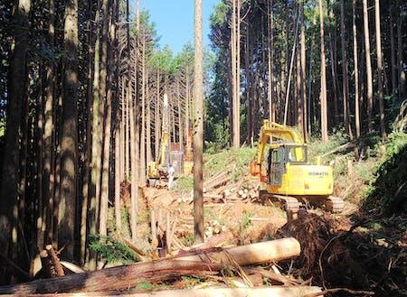 高性能林業機械を用いて作業道を作った後に間伐を行い、伐倒した木を搬出します。