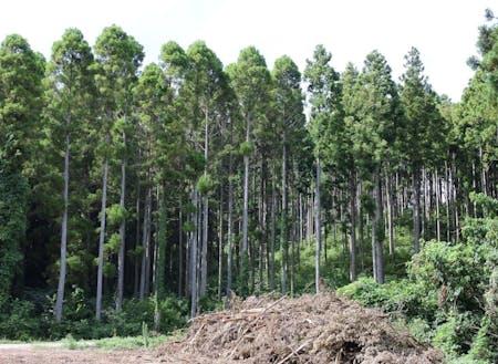 間伐を実施した中央右側は林床に光が差し込み、未実施の左側と比べて林内環境が改善しています。