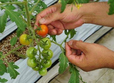 1人でも多くの方を笑顔にできるよう、野菜を種から丁寧に育てます。