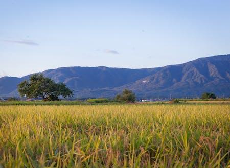 株式会社アイズケアが保有する農場で利用者さんたちと農業体験を行います。