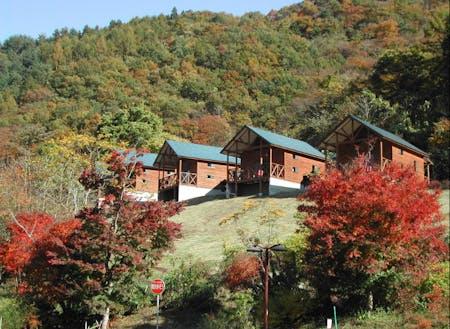 上野村のアウトドアリゾート施設「まほーばの森」