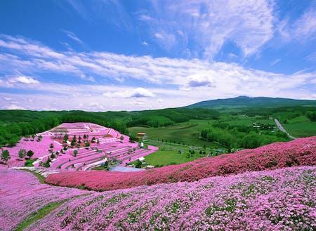 大空町は芝桜で有名。四季折々の景色を楽しむことができます。