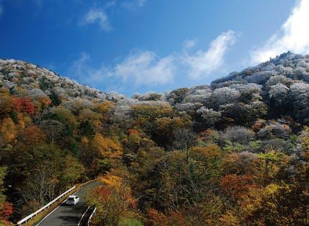 大台ヶ原の紅葉と樹氷。冬の企画も一緒に考えませんか?